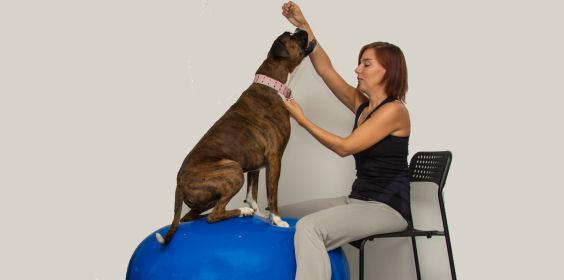 Friskvård med hund på balansboll