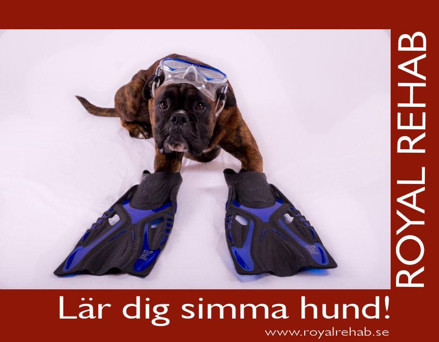 Simma hund, föreläsning hos Royal Rehab