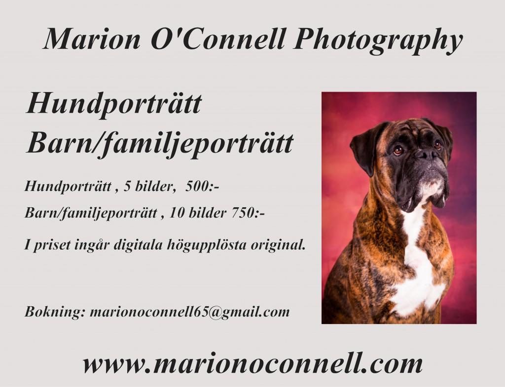 Hundporträtt, Marion O'Connell