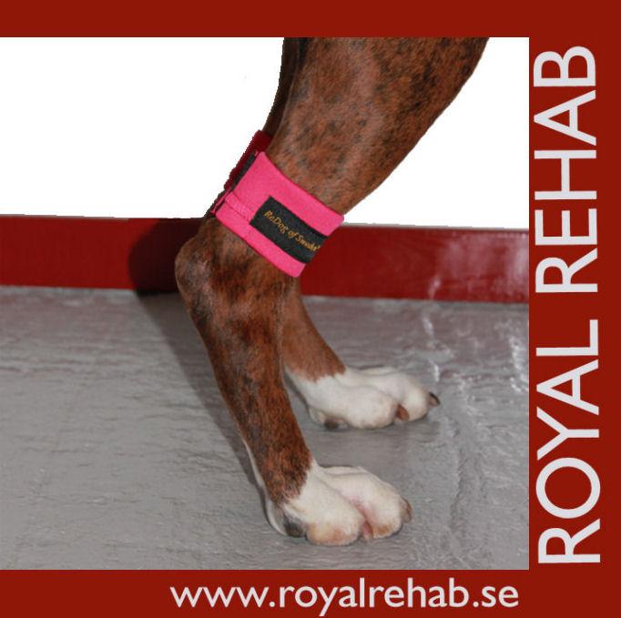 Viktmanschetter för hund, friskvård & rehab